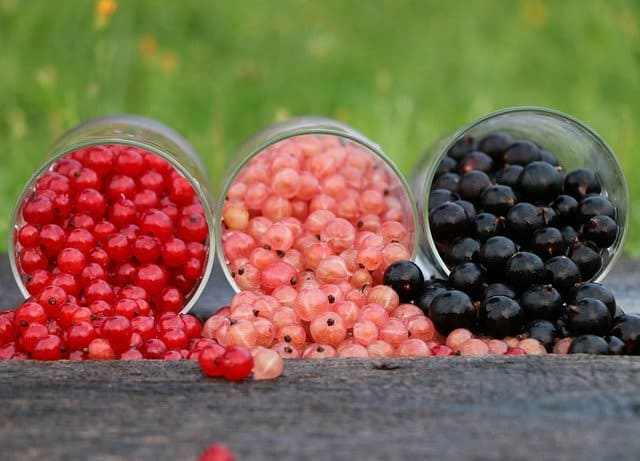 Read more about the article Ribes